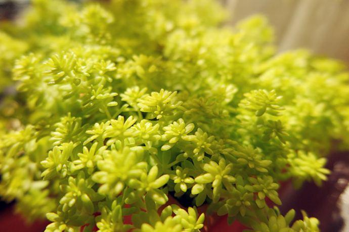 10种容易爆盆的盆栽花卉及种植和养护方法
