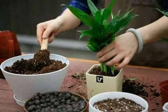 家养花卉养分供应充足的情况下,是否可以不用翻盆?